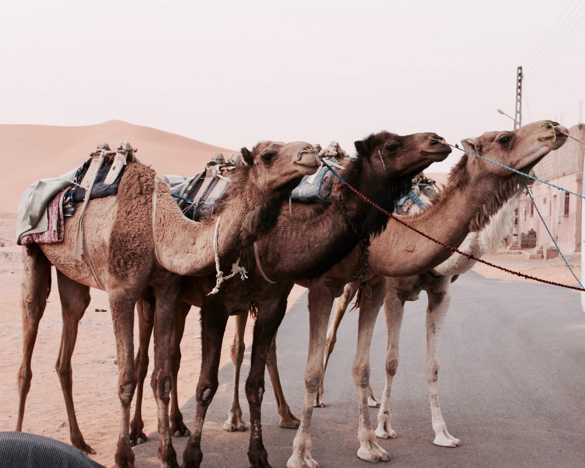 How I managed to travel to Algeria: from Constantine, passing through Ghardaia to Algiers
