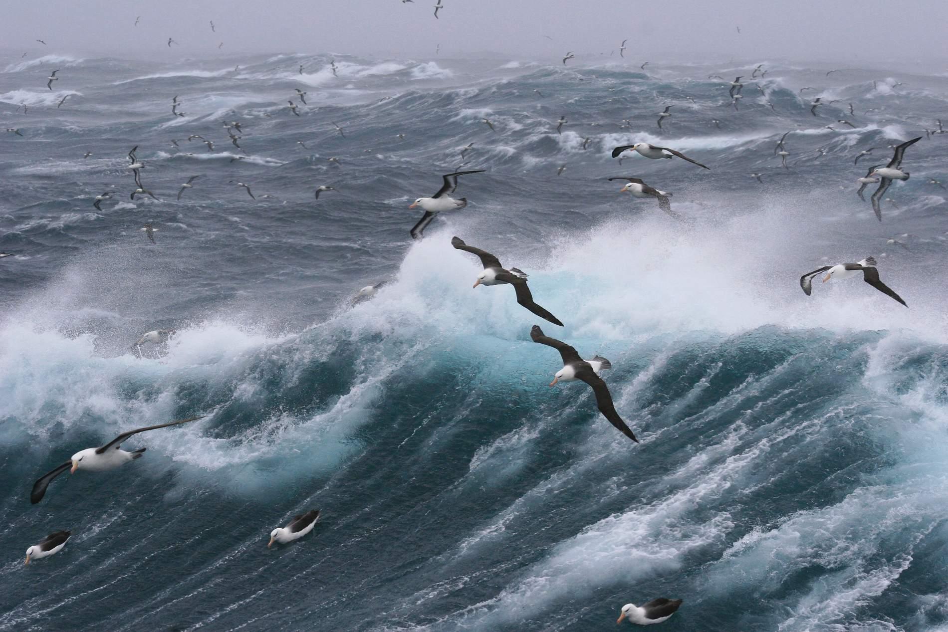 Cómo viajar a las Islas Malvinas siendo argentino (o no)